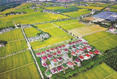 俯瞰上海市郊农村田野,一片生机勃勃。本报记者赵立荣摄