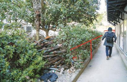 国定路600弄小区,一般只到人腰的灌木丛,却长到了一名成年男子的高度,绿地中也堆满了建材和生活垃圾,小区绿化品质亟待改善。