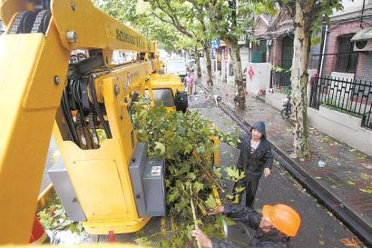武进路上,园林工人登高对挂在空中的折断树枝进行切割。本报记者 蒋迪雯 摄