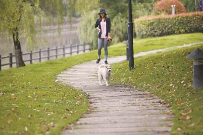 昨天,闵行区古龙路一小区的滨河绿道上,一遛狗居民未牵狗绳。均 李茂君 胡幸阳 摄