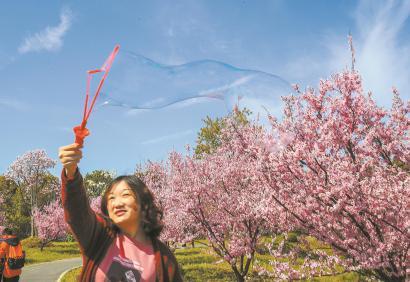上海艳阳高照春花探出枝头 吸引赏花大军出动