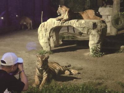 夜间动物园将呈现野生动物最本质的生活面貌。傅国林摄