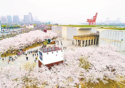 """今年清明节小长假,龙美术馆外的樱花林成市民游客""""打卡""""胜地。 (资料)"""