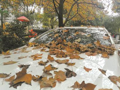 树叶飘落在车顶上成为冬日一景。邵剑平 摄