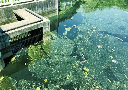 ▲在八仙泾泵闸处看到的河道水质。