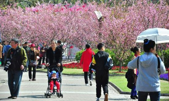 3月28日,上海人民公园海棠花盛放,吸引市民和游客前来赏花拍照。视觉中国 图