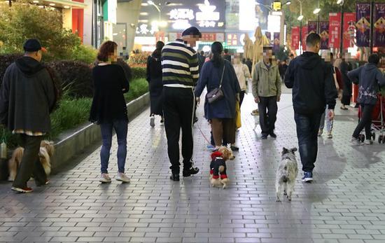图说:一些市民遛狗时不牵牵引绳新民晚报记者 陆常青 摄