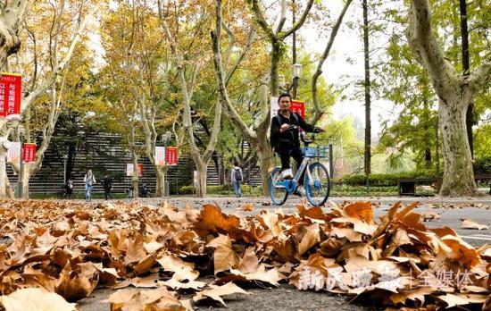 上海41条落叶不扫马路实施时间确定 上演落叶景观大片