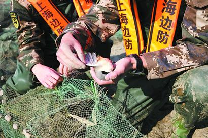 捕捞网具中的一只小鸟不幸死亡。