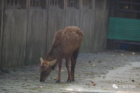 沪上动植物抗寒有妙招 动物园动物食补泡温泉过冬