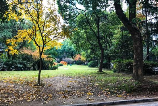 陕西北路457号,上海辞书出版社内的草坪