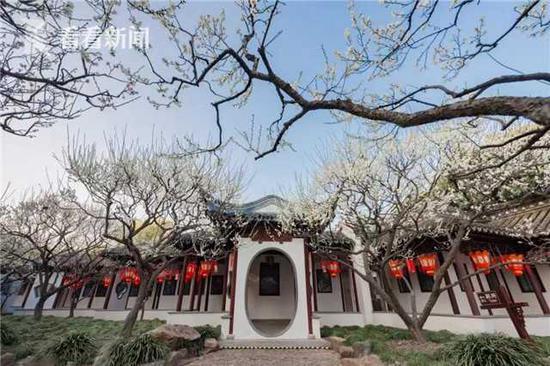 梅花盛放捷报春 沪上公园推出网上云赏花