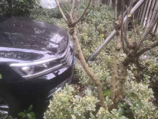 女子手痒练车冲进绿化带 因无证驾驶被拘并罚款1500元