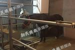 上海一商场在车库养马 管理方:用于营销有检疫证明
