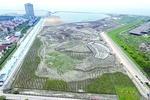 金山鹦鹉洲滩涂湿地项目完工80% 预计年底前竣工