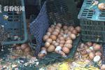 沪嘉高速货车侧翻30万只鸡蛋碎一地 蛋液淌成河(图)