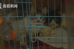上海老太养流浪猫近50只 臭味弥漫蝇虫满天居民投诉难