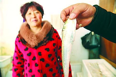 上海崇明岛团结沙渔港的一名渔户展示捕获的刀鱼。
