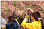 沪上多家公园游客破万 赏花需抓住春天的尾巴