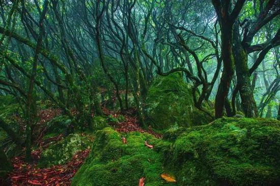 丽水松阳 · 箬寮原始森林
