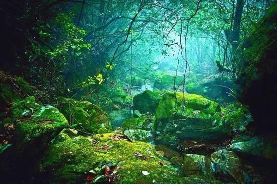 温州泰顺 · 乌岩岭