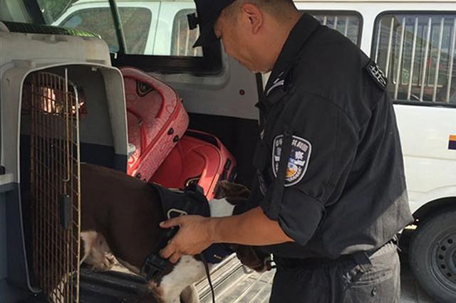 排爆警犬高温天每日查六百箱包 需人工降温五六次