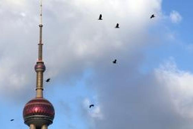 上海出伏后或仍有高温天 是否有秋老虎要到9月再看