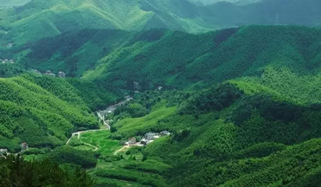 莫 干 山