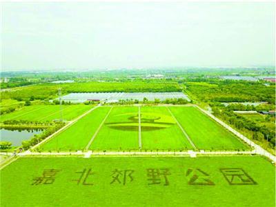水稻田种出公园字样和LOGO/晨报记者 郁文艳 嘉北郊野公园