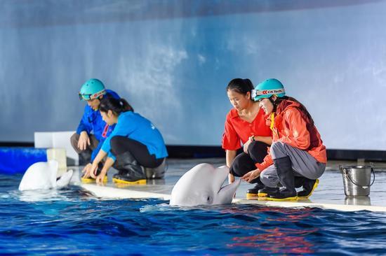 白鲸剧场全面升级,声光水影带来沉浸式颠覆体验