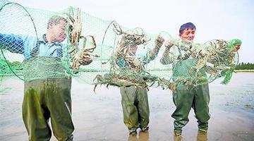 黄浦江大闸蟹开捕 价格与往年持平