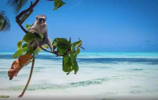 动物黑白疣猴