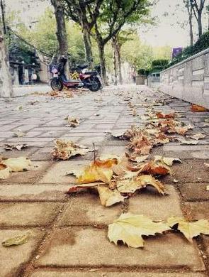 上海29条落叶景观道名单公布