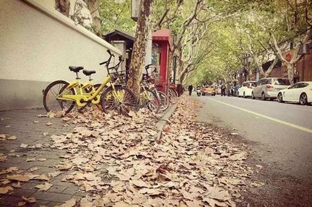 上海29条落叶景观道落叶不扫 街区最美时节更适合漫步