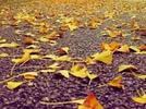 秋意正浓 领略魔都满园秋色