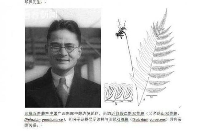 辰山植物园发现传说中的新隐存种:印禅双盖蕨
