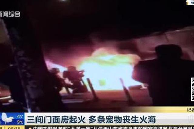 视频:徐汇一小区三间门面店起火 多条宠物丧生火海