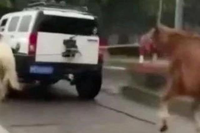 司机驾车牵引马匹上道路行驶 被交警???00元记2分