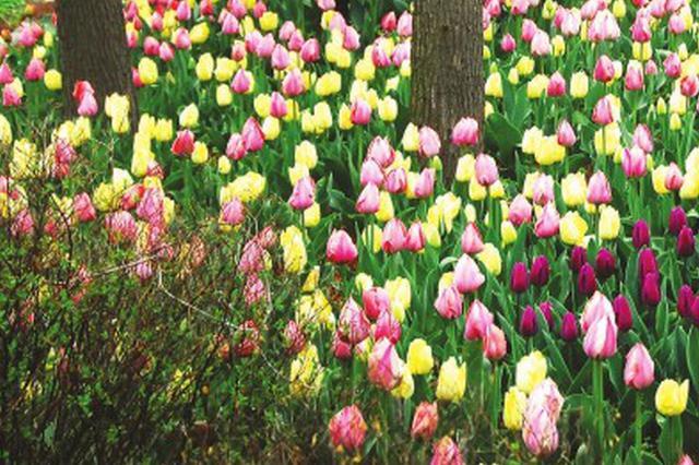 上海国际花展开幕 引进荷兰50多个新优品种大丽花