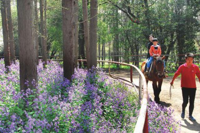 森林公园百花闹春 五条特色赏花路供游客赏尽风光