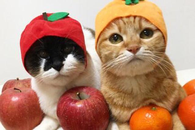 猫咪装扮成美食的模样