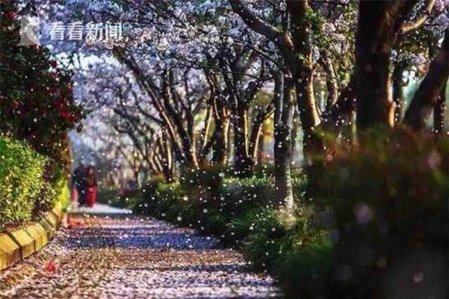 上海首条?;ㄊ屑读忠竦烙;ㄓ昶?唯美浪漫
