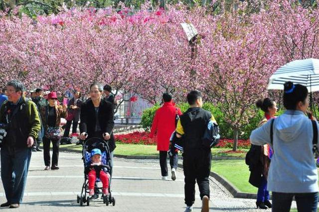 上海成今年春游最受欢迎城市 赏花和自驾游最热门