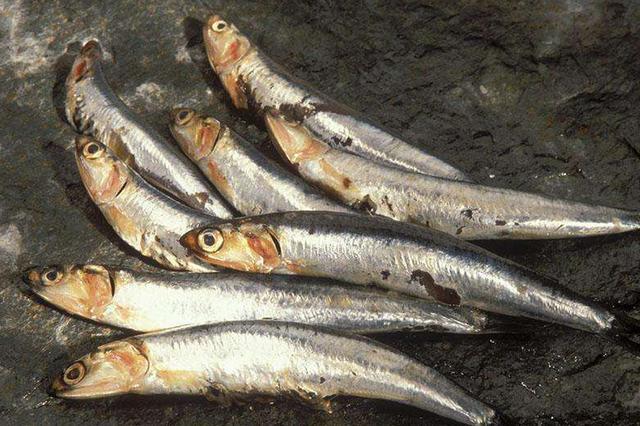 沪上平价海鲜进最适宜品尝期 花蛤蛏子肉质肥美鲜嫩
