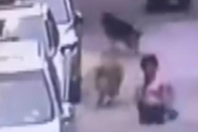 男子放任大型犬无绳乱窜 将老人撞伤后转身就溜