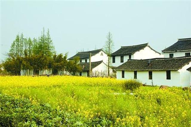 奉贤菜花节伏羊节举办十年 品牌乡村旅游期待转型升级