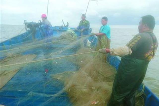 崇明末代长江捕鱼人将上岸 记者亲历最后一季长江捕捞