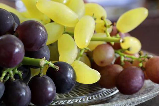 1100多亩金山施泉葡萄采摘上市 曾获14个全国金奖