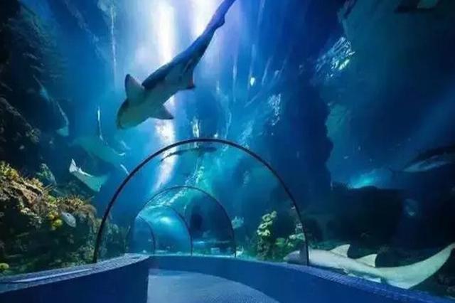 上海海洋水族馆回应停售优惠票:知错就改 今天上线