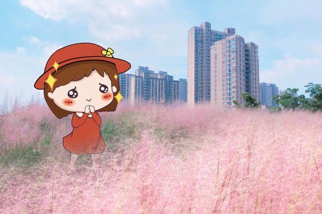 彩虹湾公园现2000多平米粉色田野 轻盈曼妙似粉色云雾
